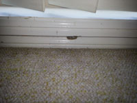 Little hole the mice use to get in your home.