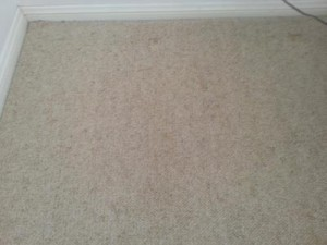 Wool carpet with indent marks