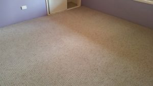 Clean carpets Ipswich